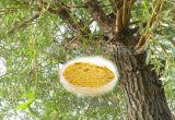Extrait normal d'écorce de saule blanc de 100% avec Salicin