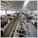ISOの販売のためのプレハブの軽い鋼鉄低価格牛農場の構築の建物