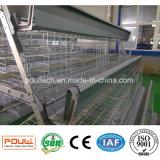 La volaille renferment des cages de ferme de poulet de batterie