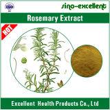Poudre normale d'extrait de 100% Rosemary