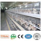 un matériel Uesd de cage de poussins de poulette de bâti dans la ferme avicole