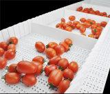 Correia transportadora modular da indústria alimentar