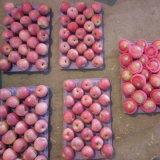 La nueva cosecha de Qinguan Apple está viniendo pronto