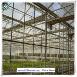 Chambre verte de systèmes hydroponiques commerciaux en verre de serre chaude de Venlo