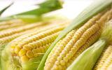 Cuisson de la machine pour le maïs