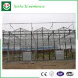 Serre chaude en aluminium commerciale de feuille de polycarbonate de bâti pour Vegebable