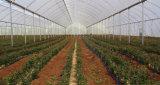 anti réseau de l'insecte 50mesh pour la compensation de serre chaude