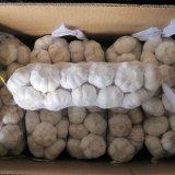 aglio bianco puro cinese di 5.0cm di piccolo pacchetto in scatola