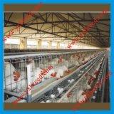 De Kooi van de vogel voor Hete Verkoop aan Algerije en Afrika