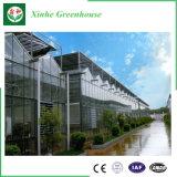 Tomate plantant la Chambre verte de polycarbonate