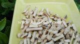 De zeer Heerlijke Droge Korrels van de Paddestoel Shiitake