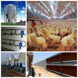 Ein Endvorfabrizierter Geflügelfarm-Haus-Aufbau