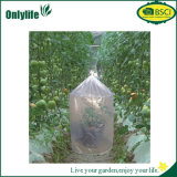 L'usine de Petransparent de jardin d'Onlylife protègent le tube