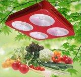 La PANNOCCHIA piena LED di spettro 300W si sviluppa chiara per Growing Flowering della pianta d'appartamento e della serra
