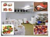 PU Sanwichのパネルの冷凍の冷蔵室か送風フリーザー