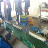 Exportação do classificador do peso da galinha inteira/graduador do peso a Indonésia e a Malaysia