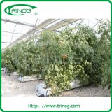 Film commerciale Greenhouse per Vegetable