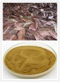 ビワの葉のエキス/ビワのエキスの粉