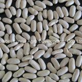 Китайская фасоль почки среднего размера белая 180-200