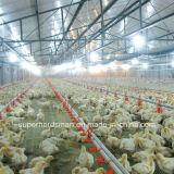 Matériel de l'eau de ferme avicole pour des poulets