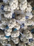 Aglio bianco puro fresco cinese del nuovo raccolto