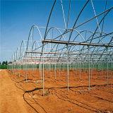 2017 최신 판매에 의하여 직류 전기를 통하는 강철 프레임 중국 다중 경간 토마토 온실