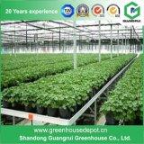 Estufa de vidro da boa qualidade para sistemas Growing hidropónicos