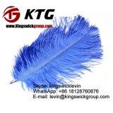 Penas coloridas 40-45cm da avestruz da venda por atacado da fonte da fábrica