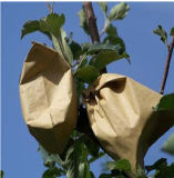 Mangos que crecen las bolsas de papel