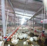 강철 구조물 닭장이 Prefabricated 강철 구조물 가금에 의하여 유숙하거나 점화한다