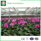Plastikfilm-Tunnel-Gewächshaus für das Pflanzen der Blumen