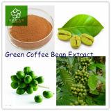 Estratto verde puro 100% caldo del chicco di caffè 2015
