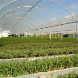 옥외 Hydroponic 공장 가격 온실은 천막을 증가한다