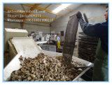 A ostra cresce o saco do engranzamento da ostra da alta qualidade do saco