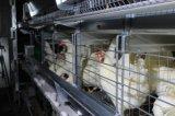 Cage automatique durable de poulet de couche de batterie de bâti du meilleur modèle H de Poultech
