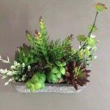 Migliori piante artificiali di vendita di Gu-SD0192 succulente