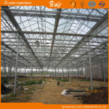 Venlo Structure를 가진 광대하게 Used Beautiful Glass Greenhouse