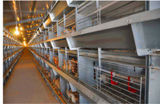 Клетка батареи курочки для птицефермы для курочки сбывания арретирует систему (тип рамка h)