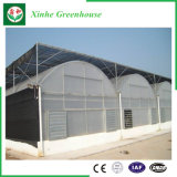 Landwirtschafts-Plastikfilm-grünes Haus für das Pflanzen