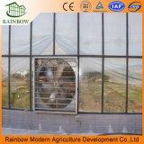 Invernadero de vidrio de marco de acero galvanizado