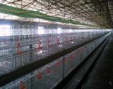 H-Tipo jaula de la capa del pollo para la parrilla con automático