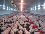 Galinha House/Poultry House com Full Set Farm Automatic Poultry Equipment (zh-1)