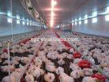 Structure de aço Chicken House/Poultry House com Full Set Automatic Equipment