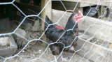 Rede sextavada galvanizada do engranzamento de fio para a gaiola do cão do coelho da galinha com alta qualidade