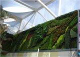 녹색 벽 구 Wall2477792489의 고품질 인공적인 플랜트 그리고 꽃