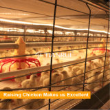 Горячее оборудование птицефермы бройлера сбывания в рынке Африки