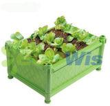 O vegetal da planta cresce a caixa (HT5123)