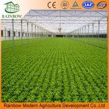 Sistema de irrigação agricultural da tubulação do PVC da água da estufa