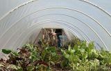100%년 Virgin HDPE 온실 곤충 그물 플라스틱 반대로 곤충 그물