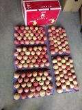 2016 Rot-Stern Apple/Papier eingesackter roter Stern Apple